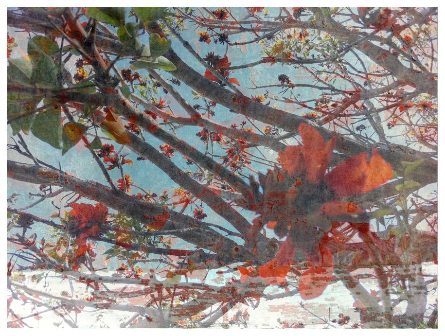Flamboyant, Collage, 50x40cm, Digiprint auf Hahnemühle Museumspapier